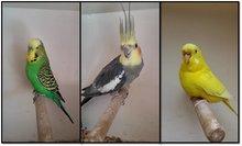Soorten Vogels