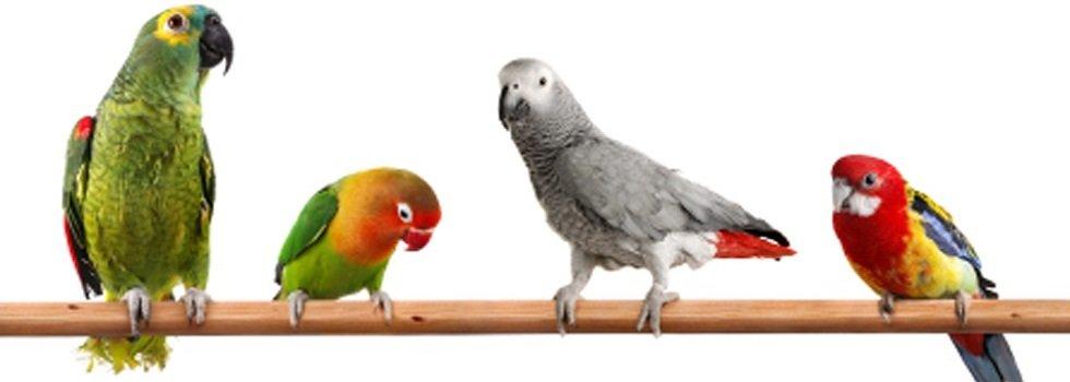 Parkieten en papegaaien